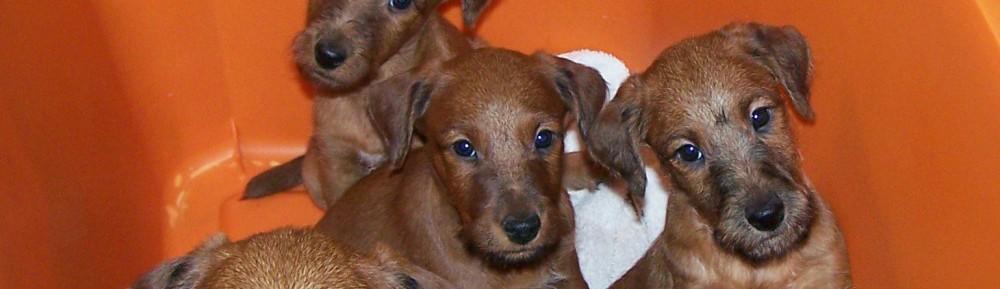 Anamcara Irish Terriers