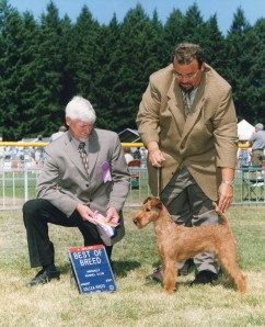 sacramento-irish-terrier-northern-california-roz